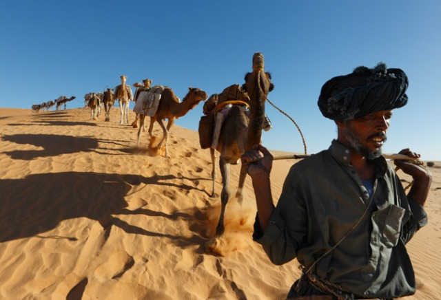 A caravanner of mixed Tuareg and Arab descent leads his camels in Mali. His Tuareg uncles taught him which plants can cure—or kill—his animals and how to navigate by the color, texture, and taste of sand.