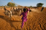 Beating back thirsty donkeys, a Tuareg boy keeps order at a desert well.