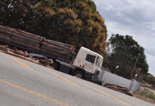 mozambique_trees