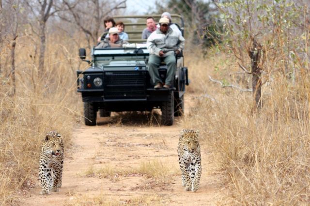 after-an-exhilirating-safari-game-drive-sabi-sands-game-reserve-south-africa+1152_12887770739-tpfil02aw-14396