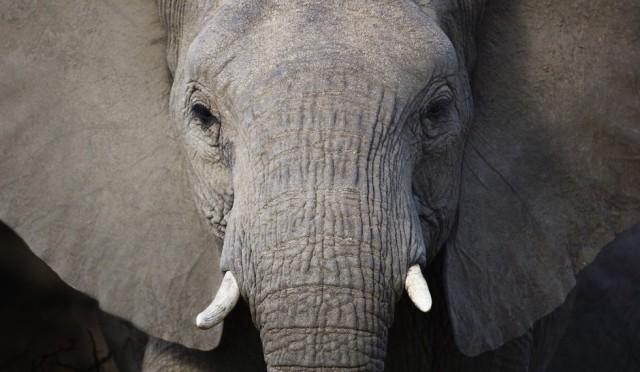 elefante_980x571