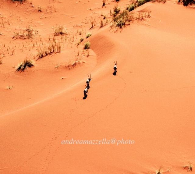 Orici nel deserto - Namibia