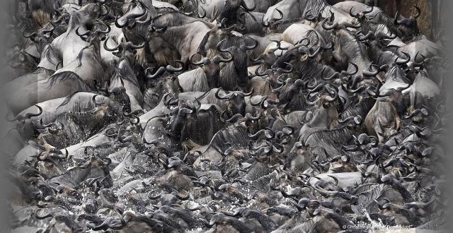migration-wildebeest-serengeti