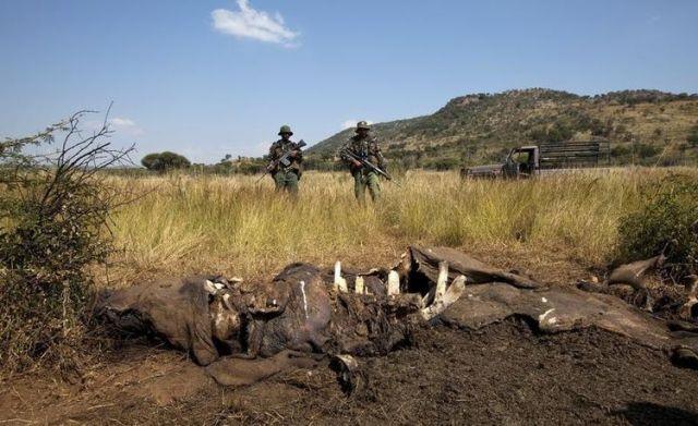 africa-poaching_namibia_rhino