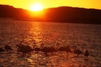 Fenicotteri rosa al tramonto di Walvis Bay (foto di Andrea Mazzella)