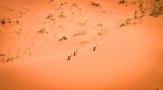 Gli orici possono resistere nel deserto senza bere per giorni, ricavano l'acqua dai pochi cespugli di erba e dalle foglie limitando al minimo la dispersione dei liquidi corporei (foto di Andrea Mazzella)