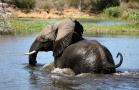 Un elefante attraversa il confine fluviale tra Namibia e Botswana nella zona del Caprivi, nell'estremo nord della Namibia (foto di Andrea Mazzella)