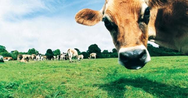 37765-up-animal-photos-goofy-farm-animals-funny-farmyard-animal-wallpapers-640x335