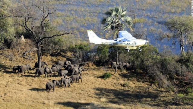 160826113420-01-elephant-census-ewb-botswana-10-flying-super-169