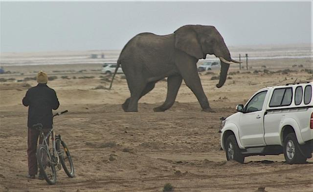 Elephant(1)